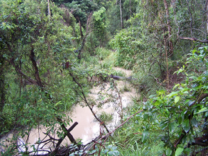 Oxley Creek anabranch, 2003, Source: Rob Scott